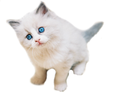 Cats GIF Stickers - Find &- Share on GIPHY